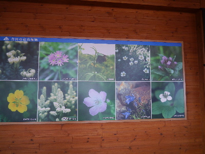 白山の花達