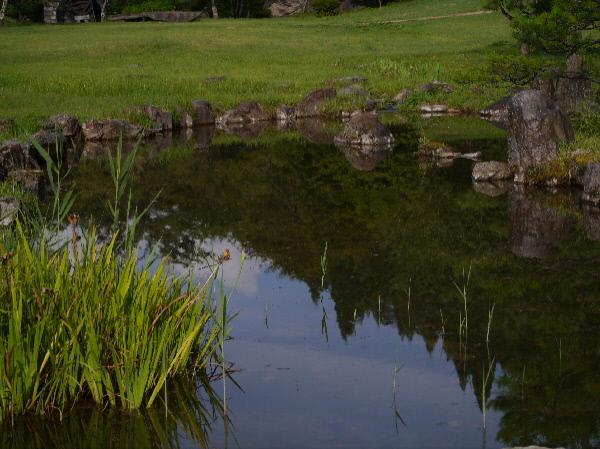 タニシの池