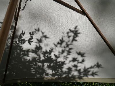 木の葉の影絵