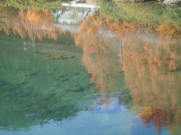 川面のメタセコイア