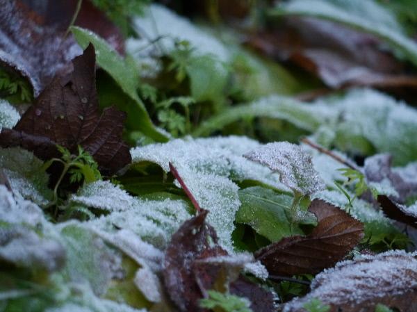 霜の降りた朝