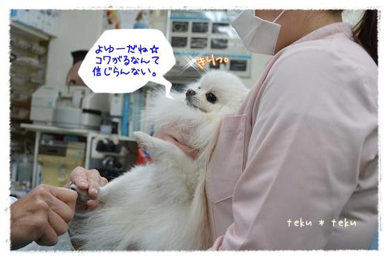 007_20121217195701.jpg
