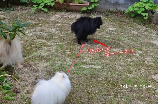 009_20120925215558.jpg