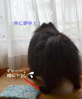 024_20120715224554.jpg