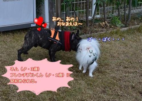 025_20121225200751.jpg