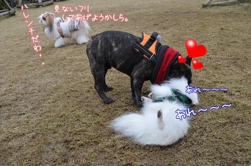 030_20121225201152.jpg