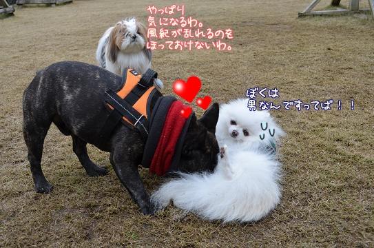 031_20121225201153.jpg