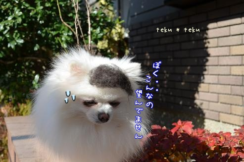 038_20121212214209.jpg