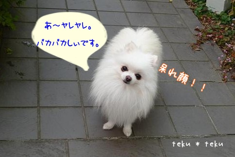 P1170832.jpg