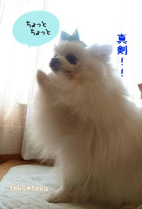 ne_20120508185442.jpg