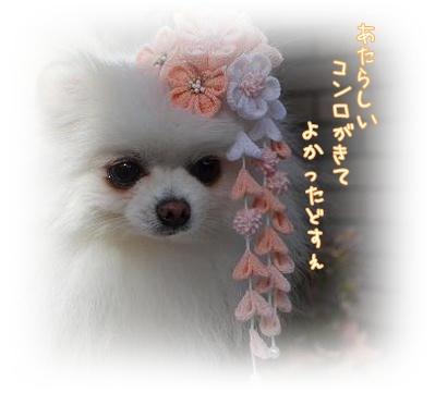 ne_20121129224936.jpg
