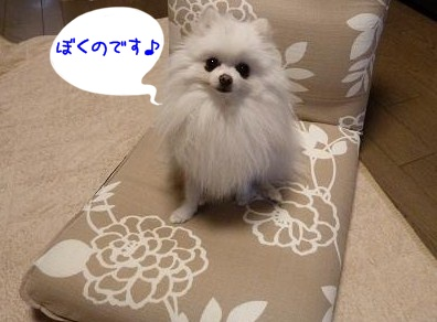ne_20121202205627.jpg