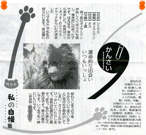 sinbun2.jpg