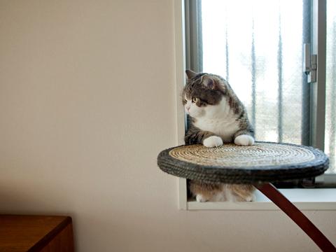 Котики и кошечки 20120615-01
