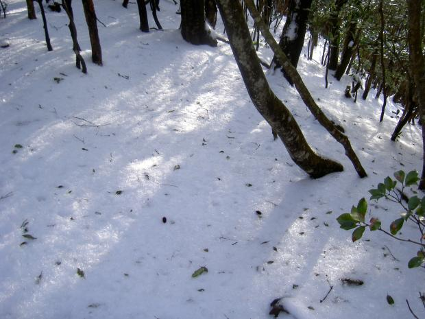 樹林の林床には雪がある