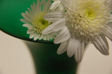 「写真で散歩」花愛で【緑色ガラス花器と菊】