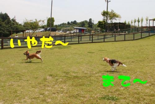 IMG_3739-1.jpg