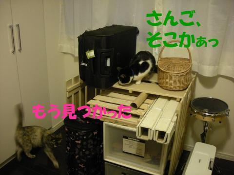 2012121908.jpg