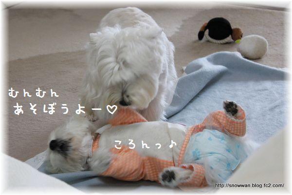 017_20120610151931.jpg