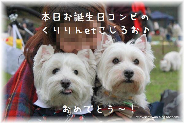 230_20121116031732.jpg