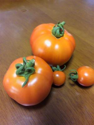 トマト20120704