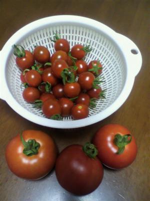 トマト20120720