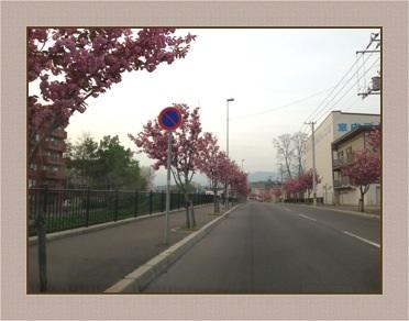 八重桜並木道