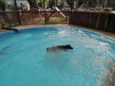 泳いでいます