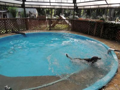 なんとか泳いでいます。