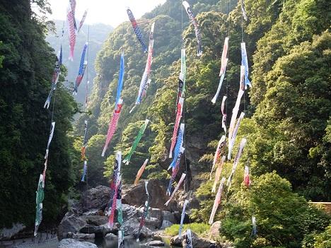 5月27日 吾川・鯉のぼり