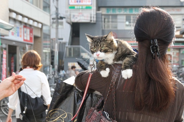 kabukun2.jpg