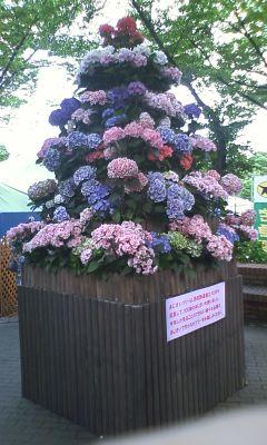20120610あじさい祭り2