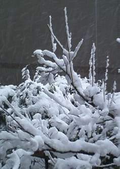 20130114雪の日