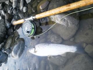 20121025_27saigawa12.jpg