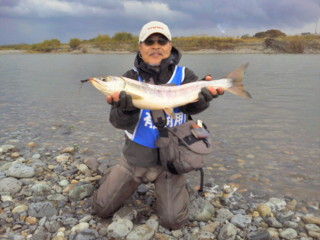20121106_07tedorigawa_salmon5.jpg