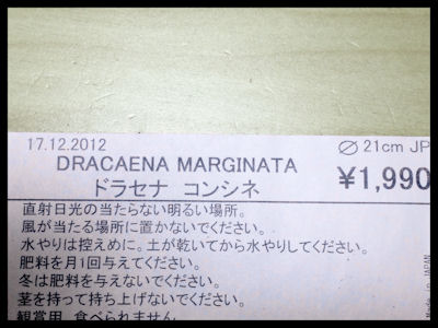 dracaena400.jpg