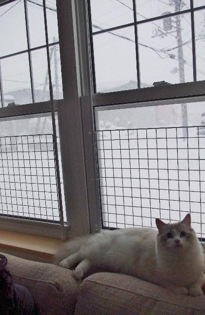雪IMGP5881