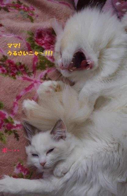 団子IMGP6615