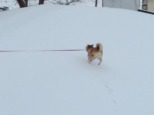 ウキウキ雪散歩