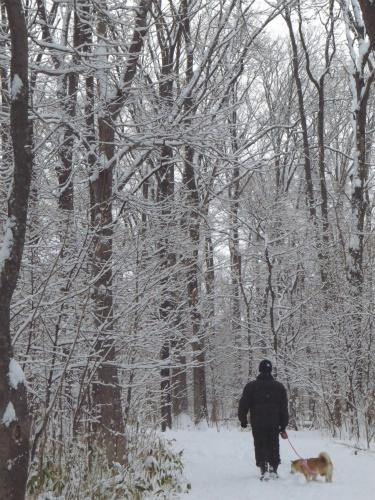雪の朝散歩