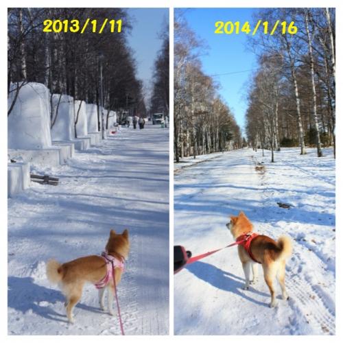 緑ヶ丘去年と今年