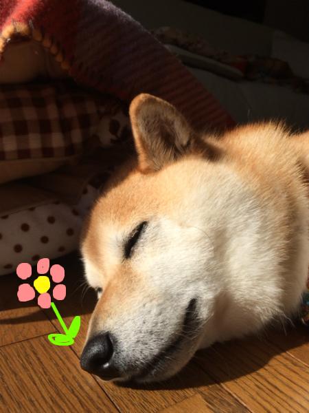 華の鼻に花