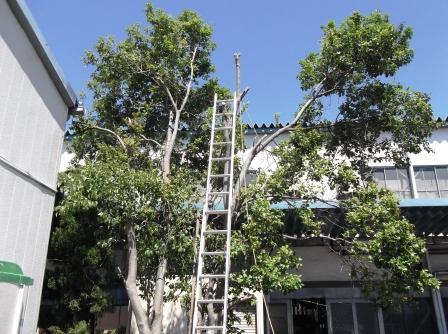 植木伐採w1