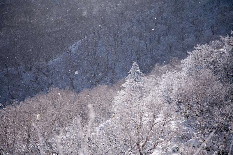 huppushi20121124-3332.jpg