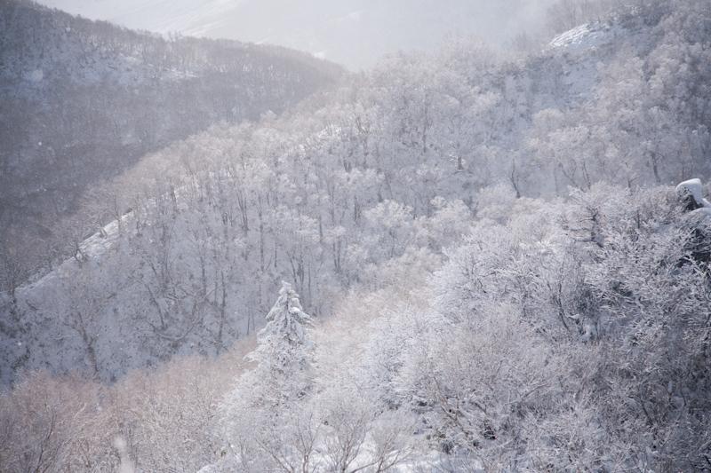 huppushi20121124-3339.jpg