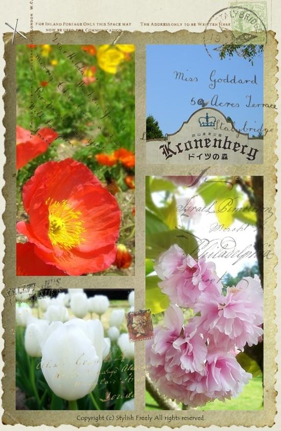 ドイツの森の花々