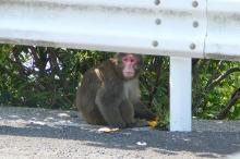 獣の足跡をたどって・・・-都井岬の猿