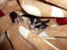 獣の足跡をたどって・・・-毛布からコンニチワ