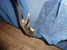 獣の足跡をたどって・・・-蚊帳ぶら下がり