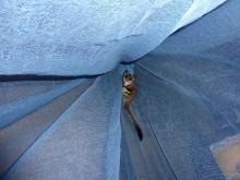 獣の足跡をたどって・・・-蚊帳のぼり